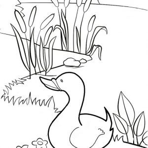 Best Duck Standing Coloring Page