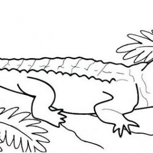 Funny Male Crocodile Coloring Pages For Kids