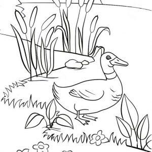 Fun Duck Walking Coloring Page