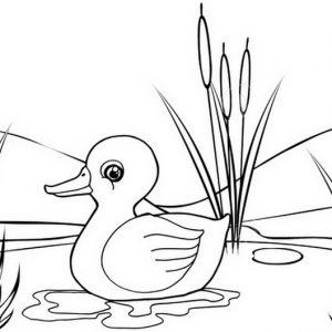 Sad Duck Cartoon Coloring Page