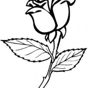 Axia Rose flower coloring page for girl