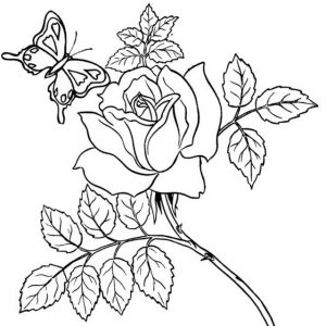 Beautiful Rose with Butterfly surrounding coloring page