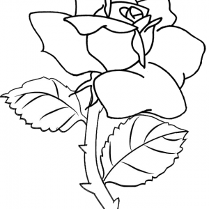 Blooming rose flower coloring page