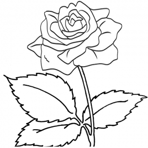 Bluelans rose coloring sheet