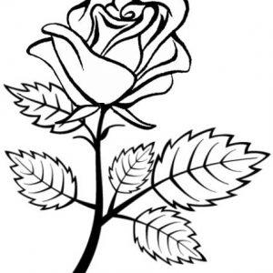 Red Rose coloring sheet from Gita