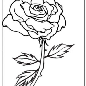 Rose in the frame coloring page