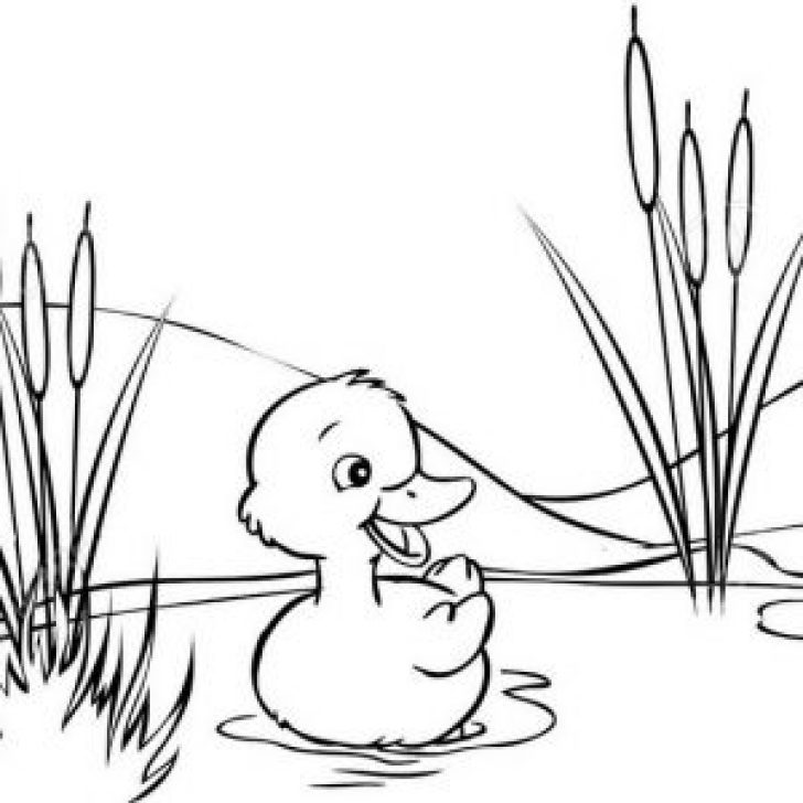 Permalink to 14 Cute Duck Coloring Pages for Kids