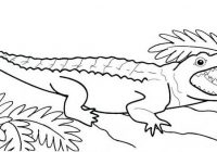 Crocodile Coloring Pages For Kids copy.jpgvv